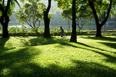 People ride  on the bicycle lane. People ride bicycle on the bicycle lane in the park for morning exercise Stock Photo