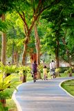 People ride bike in Bicycle path in Public Park Royalty Free Stock Photos