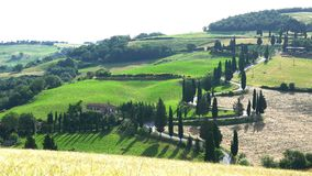People ride the bike down through the curved street with the line of Cypresses trees at the hilly landscape of Tuscan field. In Italy stock video