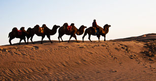 People ride a camel. The Sahara desert in China Chinese a camel Royalty Free Stock Photo
