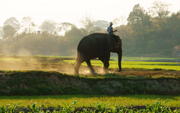 People ride elephant on path at countryside Royalty Free Stock Photography