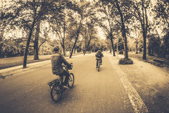 People Riding Bicycle Sepia Photography Stock Image