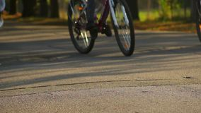 People riding bicycles in the park on sunny summer day, healthy outdoor activity stock video