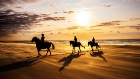 People Riding Horses at the Beach