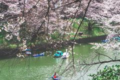 People are riding the Paddle boat in Chidorigafuchi Canal for viewing Cherry Blossom stock images