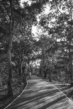People is riding in the Sri Nakhon Khuean Khan Park, Bang Kachao, Thailand. Image of black and white. BANG KRACHAO, BANGKOK - APRIL9, 2016 - People is riding in Stock Images