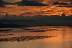 People with row boat on sea at sunrise. These bamboo shelves are used for breeding kelp Royalty Free Stock Images