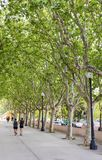 Jogging under the plants in Barcelona. People run in spring under the plants royalty free stock photography