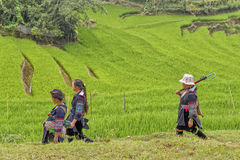 People of Sa Pa in Vietnam. Women of the Black Hmong Ethic Minority people walking through the rice fields of Sa Pa Stock Photo