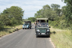 People on safari in kruger national park Stock Images