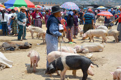 People sale pigs Stock Photography