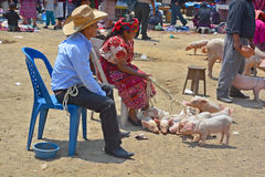 People sale pigs Royalty Free Stock Photos