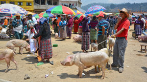 People sale pigs Stock Image