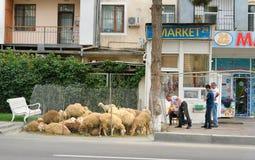 People sale sheeps during Bakrid festival Eid al-Adha. Baku royalty free stock image