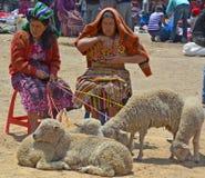 People sale sheeps Stock Image