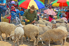 People sale sheeps Royalty Free Stock Images