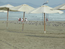 People and sea birds in a beach, Canete, Lima, Peru Stock Photo