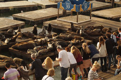 People and sea lions on pier 39 in San-Francisco Royalty Free Stock Photos