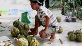 People selling durian fruits. At the local market in Mekong Delta, southern Vietnam. In-season durians can be found in mainstream Japanese supermarkets, while stock video footage
