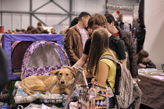 People at the show distribution of stray animals Royalty Free Stock Photo