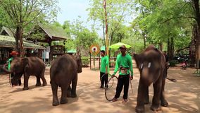 People at the show of elephants in Thailand stock video