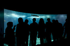 People in silhouette standing in front of an aquarium. Royalty Free Stock Images