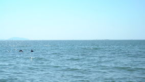 People silhouettes on jet ski and banana boat stock video footage