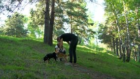 People sit on the hill with the dogs of the sheba breed. A man is playing with a dog in the woods stock footage
