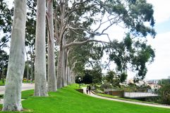 Australian people sit relax and picnic in Kings Park and Botanic garden royalty free stock photo
