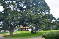 Australian people sit relax and picnic in Kings Park and Botanic garden stock photography