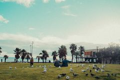 People sitting on the grass in the park full of birds. People sitting on the grass in the park full of doves royalty free stock images