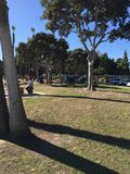 People sitting at the park. With gum trees and nice green Stock Photos