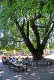 People sitting under a giant plane tree in Dilofo village Royalty Free Stock Photography