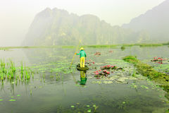 People with small boat on Van Long pond, Ninh Binh province, Vietnam. Vietnam landscapes stock image