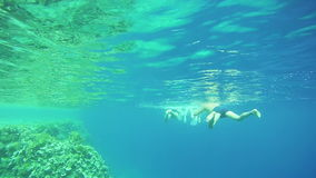 People Snorkeling Underwater in the Red Sea, Egypt stock footage