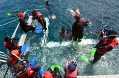 People snorkelling and dive from a platform in the Great Barrier Royalty Free Stock Images