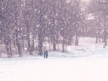 People, snowstorm, trees. Royalty Free Stock Images