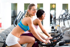 People Spinning in the gym on bicycles Stock Image