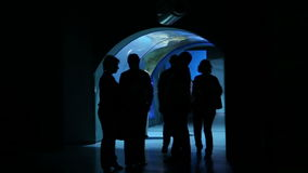 People stand in  Moskvarium biggest oceanarium in Russia stock footage
