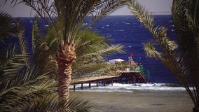 People are standing on the dock near an open ocean. People stand on the dock near an open ocean, the wind shakes the palm trees the weather is sunny stock footage
