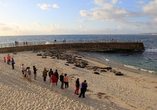 People standing near the shore, watching sea lions and seals on the beach, San Diego, California, 2016 Stock Photo