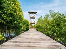 People Standing on the Tower Looking at Mangrove From Above in Mangrove Forest Conservation. Lubuk Kertang - Lubuk Kertang, Indonesia - April 22 2018 Stock Photos