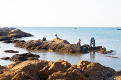 People on stones on the seashore collect mussels, shells, seafood royalty free stock photo