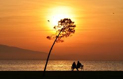 People, sunset, tree and bird Stock Photography