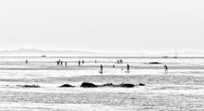 People are surfing SUP boards along the shoreline of San Diego California USA. A black and white photo in a minimalistic style stock images
