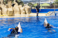 People swimming with dolphins Stock Photo