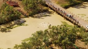 People swimming on a river aerial shot. A  birds eye view shot of a river and bridge with people on it. Camera slowly tilts up stock video
