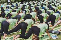 Almost 2000 people take a free collective yoga class in a city park in Milan, Italy Stock Images