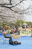 People take a look to sakura tree in Ueno park. Stock Images