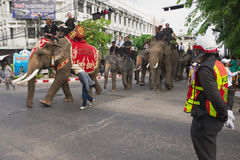 People take part in the famous Elephant parade in Surin, Thailand. Royalty Free Stock Photography
